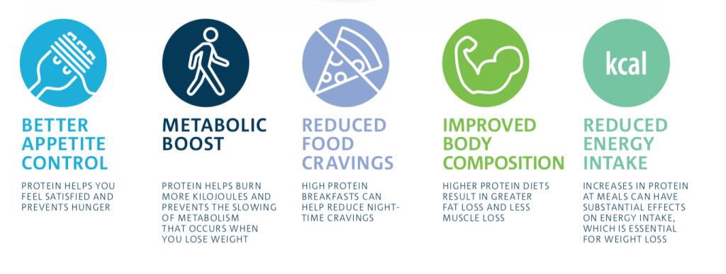 CSIRO diagram - benefits of a high protein diet